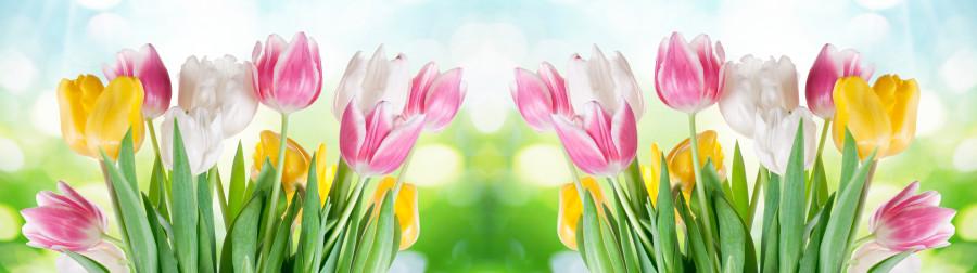 tulips-021