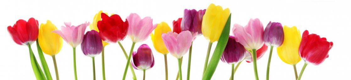 tulips-004