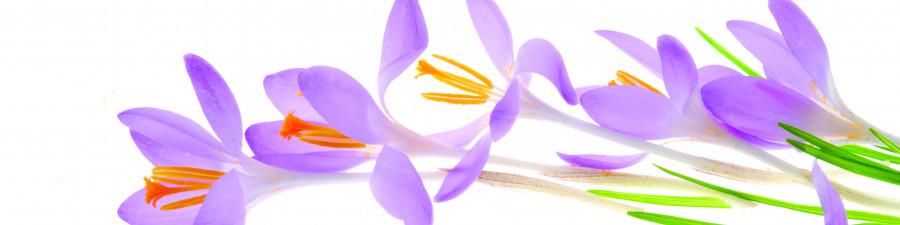 wildflowers-030