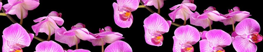 orchids-071