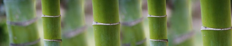 bamboo-plants-056