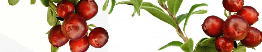 fruit-173