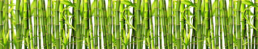 бамбук1