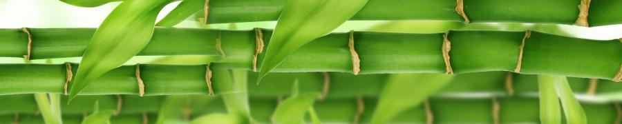 bamboo-plants-134