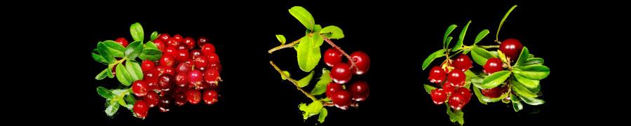 fruit-051