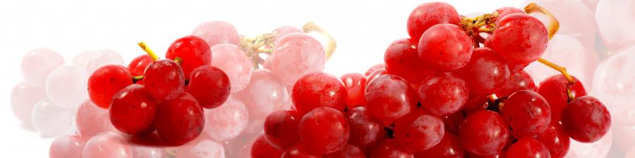 fruit-089