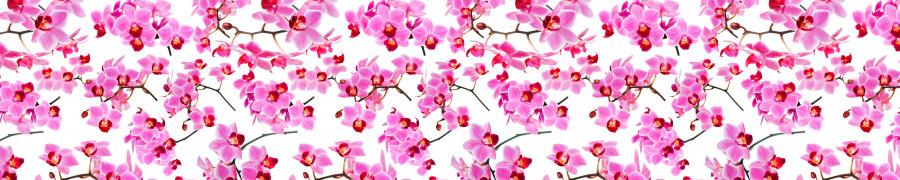 orchids-023