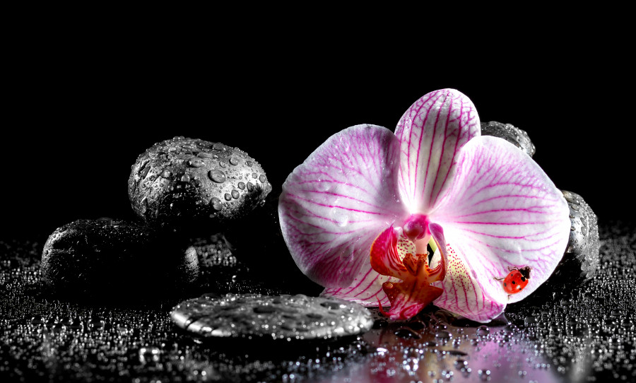 orchids-092