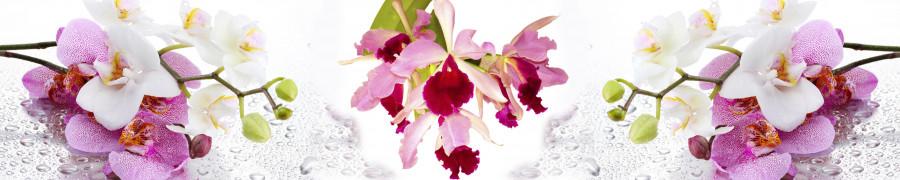 orchids-017