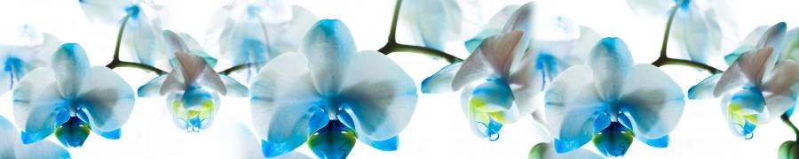 orchids-026