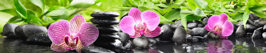 orchids-055
