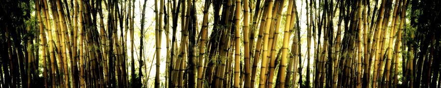 bamboo-plants-066