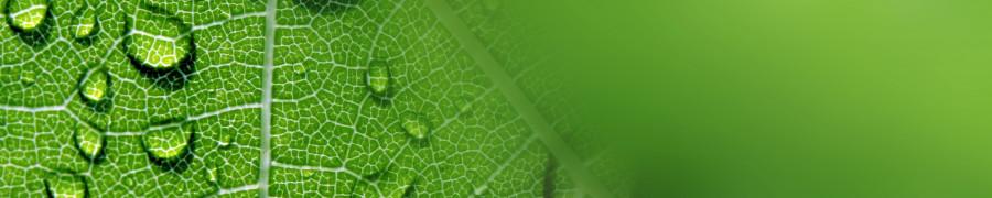 bamboo-plants-154