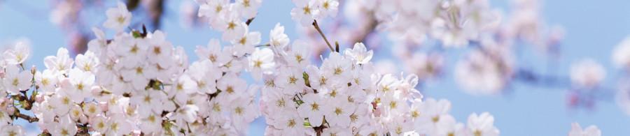 flowering-trees-021