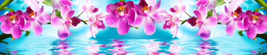 orchids-096