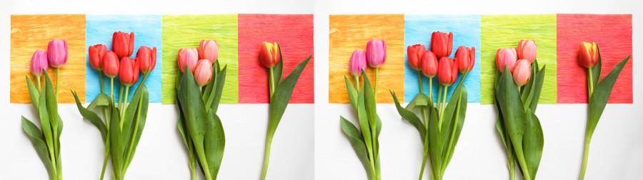 tulips-085