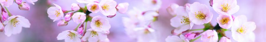 flowering-trees-005