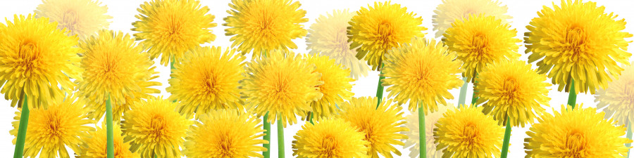 wildflowers-006