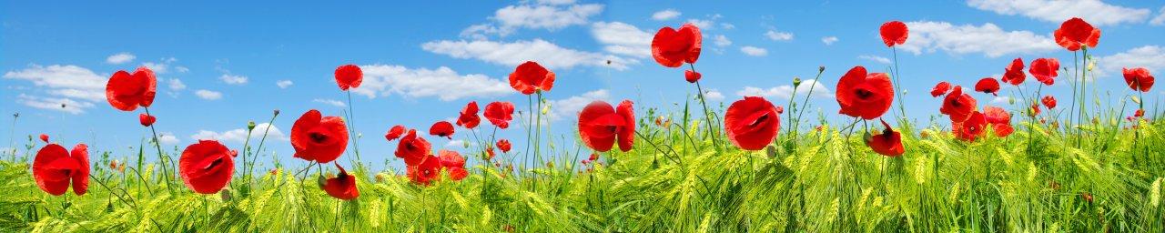 wildflowers-103