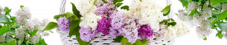 flowering-trees-046
