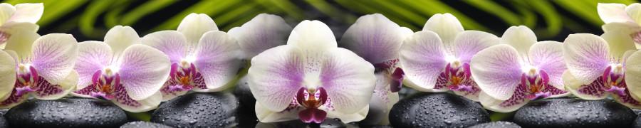 orchids-057