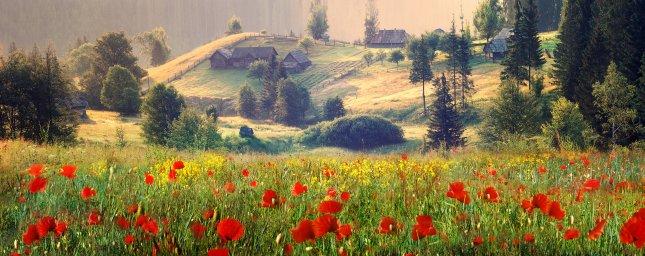 wildflowers-049