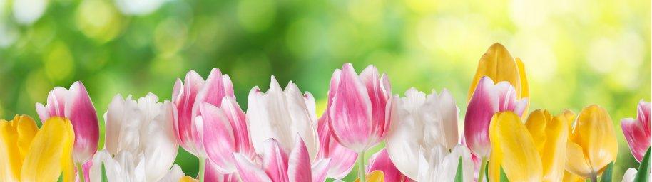 tulips-035