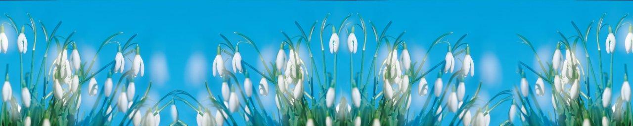 wildflowers-093