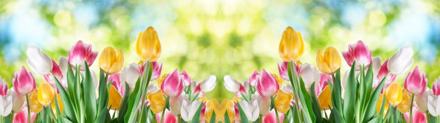 tulips-007