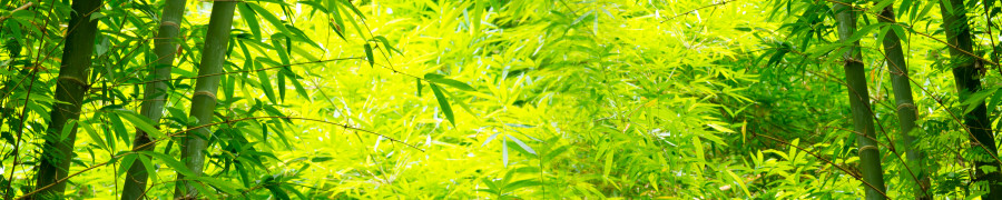 bamboo-plants-024