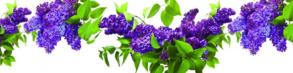 flowering-trees-055