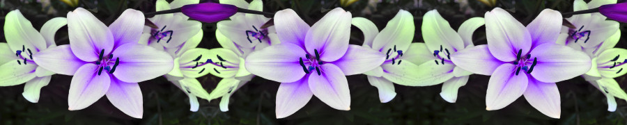 other-flower-136