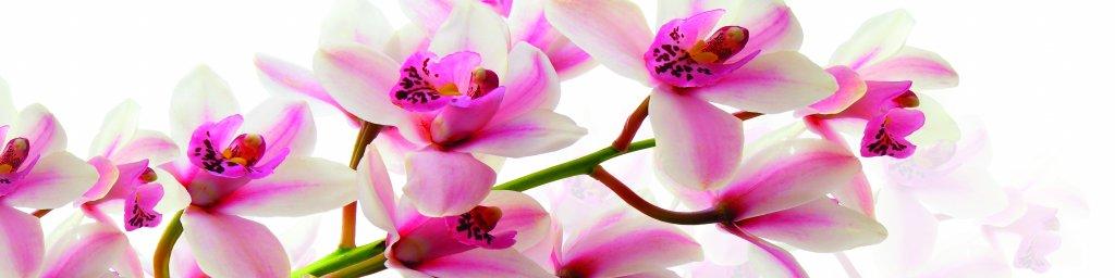 flowering-trees-053