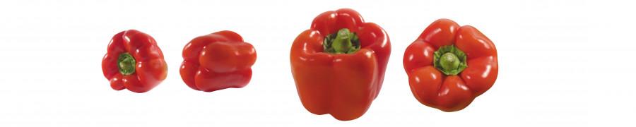 vegetables-088