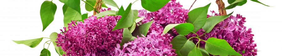 flowering-trees-080