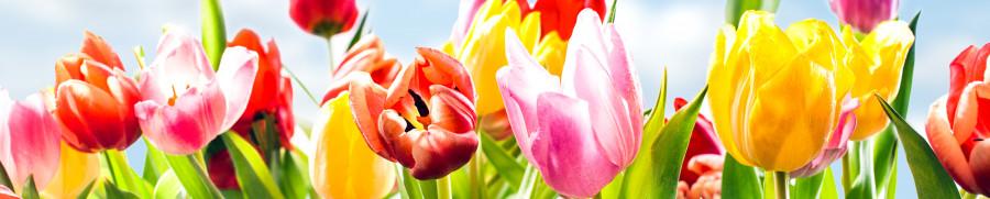 tulips-014
