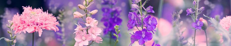wildflowers-072