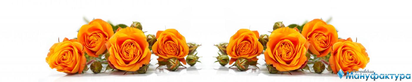 roses-047
