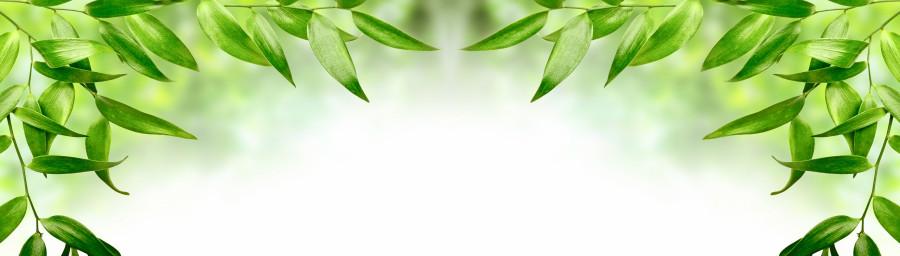 bamboo-plants-115
