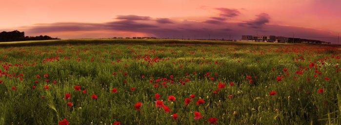 wildflowers-084