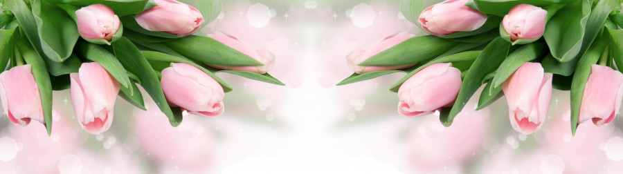 tulips-064