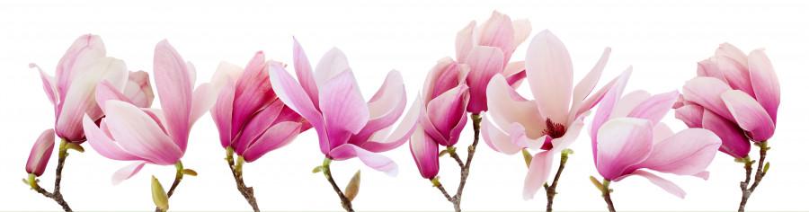 flowering-trees-023