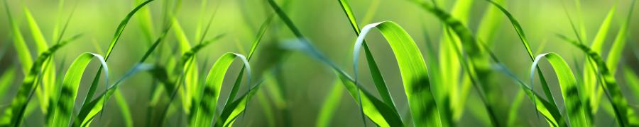 bamboo-plants-029