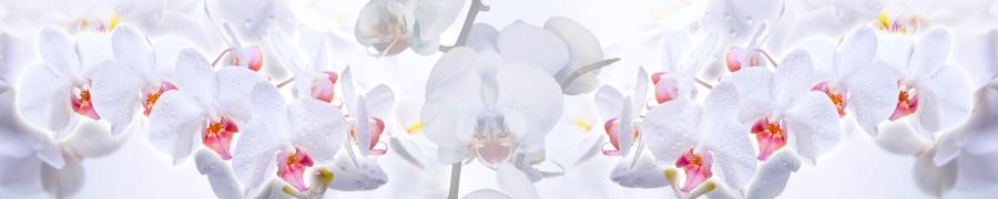 orchids-007