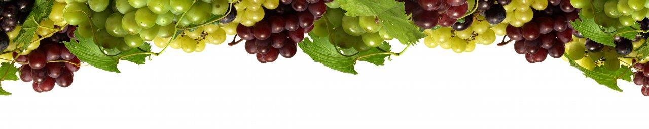 wine-079