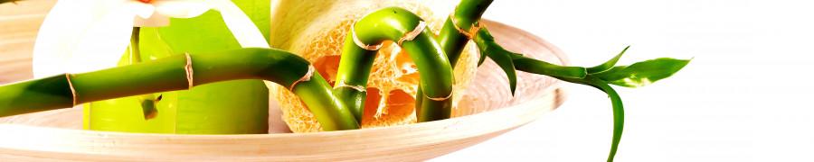 bamboo-plants-133