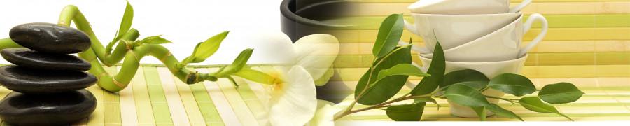 bamboo-plants-080