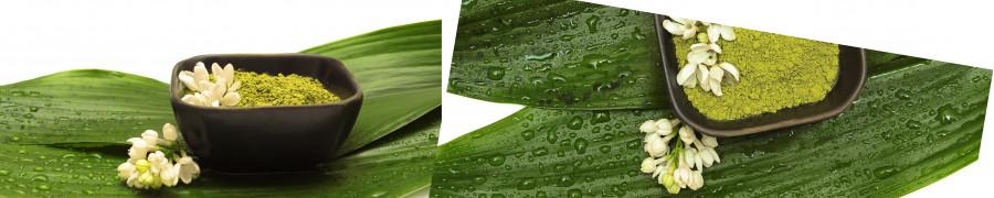 bamboo-plants-081