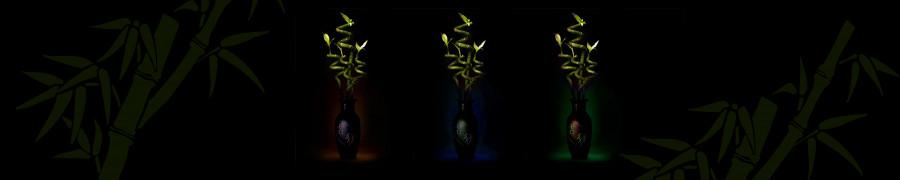 bamboo-plants-031