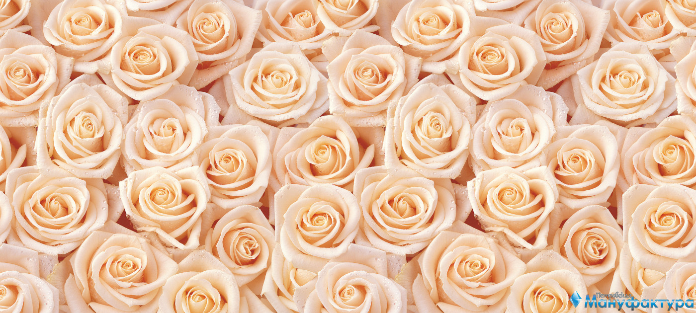 roses-021